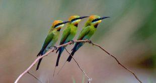 کتاب اطلس فقهی پرندگان جهان رونمایی شد